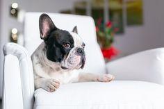 Consigli per togliere i cattivi odori che potrebbero formarsi con gli animali ... Per quanto possiate amare i vostri animali domestici, di sicuro ci sono alcune caratteristiche che non vi faranno impazzire. Come il cattivo odore...
