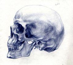Human Skull Side View Pencil Drawing Style By Linda Bucklin Via