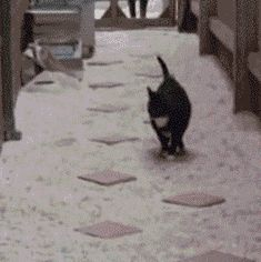225 animal gifs to make your night better. - Imgur