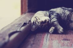 Sleep, sugar by Daria S. on 500px
