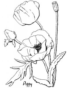 Poppy Coloring Page for Adults! - The Graphics Fairy