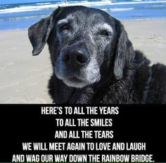 We all wish our dogs could talk – it would make things so much easier. Even though they can't speak we can tell how our dogs are feeling by the way they act. If you are wondering if your dog loves the life you are giving her, check out these 12 … I Love Dogs, Puppy Love, Cute Dogs, Animals And Pets, Cute Animals, Pet Loss Grief, Dog Poems, Pet Remembrance, Dog Rules