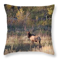 Fall Sunset Satellite Bull Elk