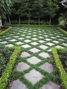 Pavers and Mondo Grass - Steingarten - Garden Floor