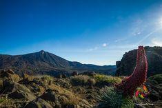 Una mañana con vistas..... #tenerife #trekking #hiking #hike #outdoors #landscape #teide #sunrise #hikingtenerife #trekkingtenerife #senderismotenerife  #sunset #nature #snow #tenerifesenderos #heritage #paisajes #fotostenerife #IslasCanarias