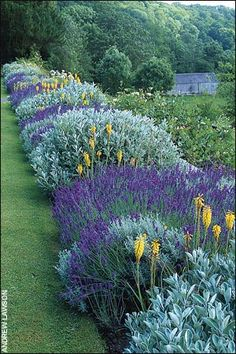 Beautiful Border Garden - love, love, love the repetition of colors that run the length of this stunning garden! Via Karen's Garden Adventures - Shimmering Silvers, Purples and Yellow