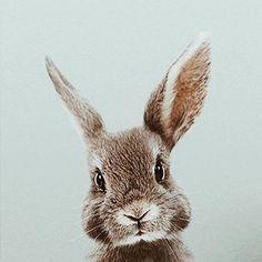 ♡ Breakfast at Chloe ♡ - Cathy F- # Breakfast - Hundebabys - Adorable Animals Cute Baby Animals, Animals And Pets, Funny Animals, Animals Images, Bunny Images, Jungle Animals, Nature Animals, Wild Animals, Lapin Art