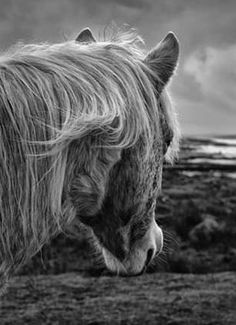giles norman is one of Irelands leading black and white landscape. Beast From The East, Black And White Landscape, Weekends Away, Central Park, Norman, Mother Nature, Skyscraper, Art Deco, Horses