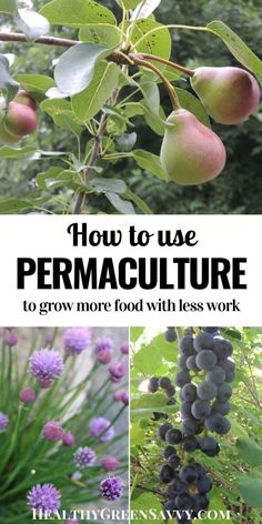 This quickstart guide to using home permaculture will help you apply basic permaculture principles for a more productive garden with less work. #ediblelandscaping #permaculture #permaculturegarden #garden #sustainability Permaculture Principles, Permaculture Design, Permaculture Garden, Organic Farming, Organic Gardening, Sustainable Gardening, Vegetable Gardening, Sustainable Living, Gardening For Beginners