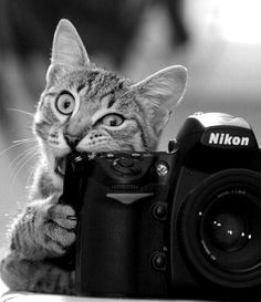 Chat Photographe Sauvage.