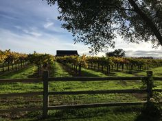 As many of you know we love wine, but we also love to visit Wine Country. This was taken from our trip to California Wine Country last month. We so enjoye California Wine, California Travel, Wine Country, Countryside, Oregon, Vineyard, Sunday, Outdoor, Beautiful