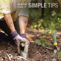 Bury Treasure in Your Garden. Plant Summer Bulbs Now. Garden Club, Home And Garden, Summer Bulbs, Buried Treasure, Planting Bulbs, Cooking Tips, Food Tips, Outdoor Plants, Curb Appeal