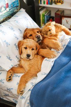 Harry's Bedroom? - Classy Girls Wear Pearls Dog Love, Puppy Love, Classy Girl, Fluffy Dogs, Heart Melting, Animal Heads, Cute Photos, Girls Wear, Mans Best Friend
