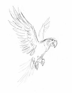 flying parrot Cool Art Drawings, Bird Drawings, Pencil Art Drawings, Art Drawings Sketches, Animal Drawings, Easy Drawings, Parrot Tattoo, Evans Art, Bird Sketch