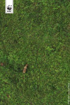 Een olifant gefotografeerd vanuit een ecodrone, Republiek Congo. WNF voorziet rangers van opsporingsapparatuur zoals de eco-drone, een onbemand vliegtuigje dat we over beschermde gebieden kunnen laten vliegen om stropers op te sporen. Investeer mee op de website van OnePlanetCrowd en steun de strijd tegen de stropers. Als dank plaatsen we jouw foto op een echte eco-drone!