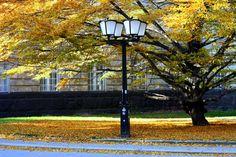 Freitag, 30.10., 13.00 Uhr – Schönberg, Kleistpark: Eine Laterne im Laub. © Vanessa Eggert