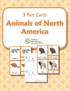 Animals of North America- Montessori 3 Part Cards with color illustrations and blacklines too.  {FREE}