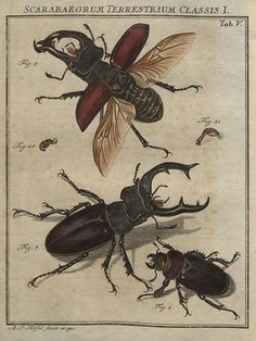 Retro Scientific Illustration: Scarabs