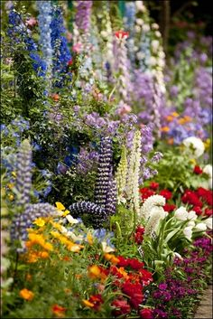 What a beautiful array of flowers!