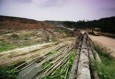 How Forest Loss Is Leading To a Rise in Human Disease by Jim Robbins: Yale Environment 360