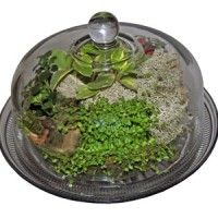 Learn how to make and care for terrariums - explore the best plants, moss, tools and techniques. Diy Terrarium Kit, Large Terrarium, Terrarium Plants, Small Plants, Cool Plants, Indoor Plants, Best Garden Tools, Organic Gardening Magazine, Cake Kit