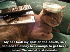 Well Played, Hoomin - LOLcats is the best place to find and submit funny cat memes and other silly cat materials to share with the world. We find the funny cats that make you LOL so that you don't have to. Funny Shit, Funny Cute, Funny Stuff, Funny Animal Pictures, Funny Animals, Cute Animals, Funniest Animals, Funny Photos, Random Pictures