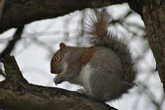 Now i was minding my own bu ... Squirrel