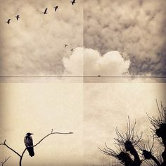 sannalinn -instagram