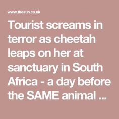 Tourist screams in terror as cheetah leaps on her at sanctuary in South Africa - a day before the SAME animal badly mauled New Zealand boy, 14