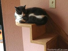 3-Step Cat Stair from The Vertical Cat by TheVerticalCat on Etsy