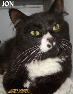 ADOPTED! Tag# 10744 Name is Jon Black/White Male-neutered,  FIV/FeLV neg & rabies vaccinated  Sweet boy, likes attention!   Located at 2396 W Genesee Street, Lapeer, Mi. For more information please call 810-667-0236. Adoption hrs M-F 9:30-12:00 & 12:30-4:15, Weds 9:30-12:00 & Sat 9:00-2:00.      https://www.facebook.com/267166810020812/photos/a.893936650677155.1073742191.267166810020812/893938150677005/?type=3&theater