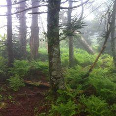 Hike to Clingman's Dome TN