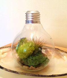 DIY Light Bulb Terrarium #Terrarium #Light_Bulb