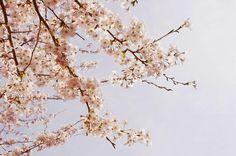 The spring ✿*゚