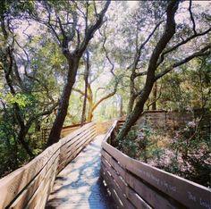 Bay Bluffs Park - Pensacola, Florida