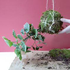 How to Make a Hanging Kokedama String Garden  - HouseBeautiful.com