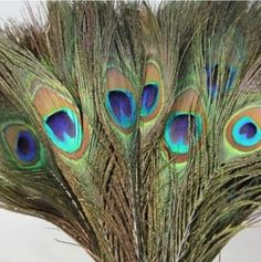 Perfect Christmas ribbon for decoration, wedding ribbon, floristry and a variety of craft uses. Peacock Tail, Peacock Feathers, Christmas Ribbon, Christmas Colors, Peacock Wall Art, Peacock Colors, Natural Eyes, Diy Wedding Decorations, Diy Decoration