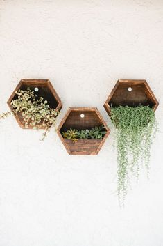 Beijos Reclaimed Shelves and Planters //interior design inspiration //natural plantings // interior plants to lift your mood Hexagon Shelves, Honeycomb Shelves, Interior Plants, Interior Design, Plant Shelves, Diy Wall Art, Wall Decor, Plant Decor, Home Accessories