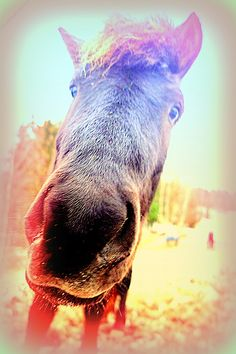 I will love you if you really love me but do you by Hilde Widerberg I Know Quotes, Love Me Quotes, Boy Best Friend Quotes, Best Friends, My Horse, Horses, Protective Boyfriend, I Love You Means, She Left Me