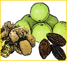 Triphala is a powerful combination of three of the most important Ayurvedic fruits: Myrobalan, Amla, and Belleric Myrobalan.
