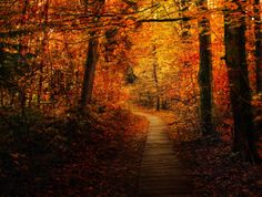 Autumn Forest Trail by `Emerald-Depths