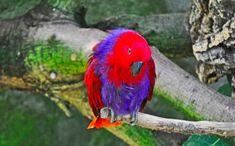 34 Stunning Pictures Of Exotic Birds Pink Cockatoo, Red Hat Ladies, Red Hat Society, Exotic Birds, Red Hats, Bird Species, Livestock, Bird Feathers, Natural World