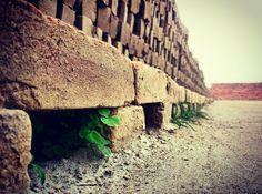 Greenlife brickyard