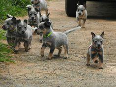 So much cuteness!!