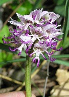 18 orquídeas que parecem mais do que flores