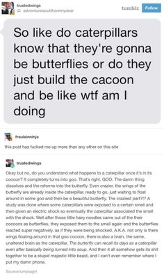 """Caterpillars basically <a href=""""https://go.redirectingat.com?id=74679X1524629&sref=https%3A%2F%2Fwww.buzzfeed.com%2Fandyneuenschwander%2F17-tumblr-posts-that-are-funny-but-will-also-teach&url=http%3A%2F%2Fphenomena.nationalgeographic.com%2F2013%2F05%2F14%2F3-d-scans-caterpillars-transforming-butterflies-metamorphosis%2F&xcust=4534051%7CAMP&xs=1"""" target=""""_blank"""">turn into goo</a> when becoming a butterfly."""