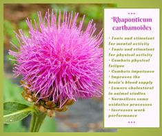 Viburnum Opulus, Rhodiola Rosea, Organic Acid, Effects Of Stress, Small White Flowers, Parts Of A Plant, Chronic Stress, Traditional Chinese Medicine, Cancer Cure