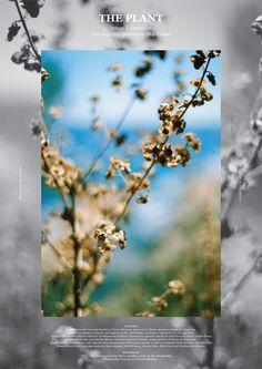 jennilee:    (via The Plant – Poster | YOUR MIND BOOKSHOP BLOG)
