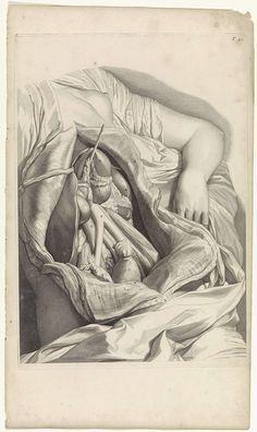 Pieter van Gunst | Anatomische studie van de ingewanden van een vrouw, Pieter van Gunst, Gerard de Lairesse, weduwe Joannes van Someren, 1685 | Anatomische studie van de buik van een vrouw, en de daar liggende ingewanden. Bovenaan rechts genummerd T. 49.