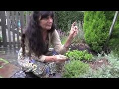 """Herbalist """"Rosemary Gladstar's Garden Wisdoms: Sage and Thyme"""" -Mountain Rose Herbs share Natural Medicine, Herbal Medicine, Herbal Remedies, Natural Remedies, Herb Farm, Herb Garden, Rosemary Gladstar, Mountain Rose Herbs, Alternative Medicine"""